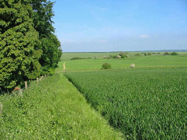 Crops Pentridge Dorset