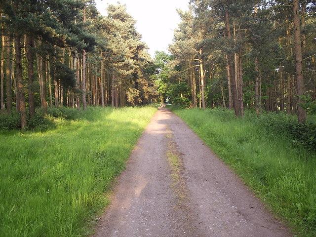 Bridleway Through Trees