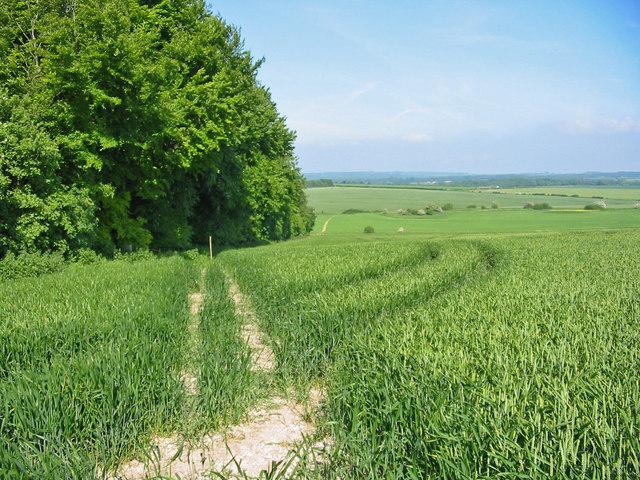 Bridleway in wheat field Pentridge Dorset
