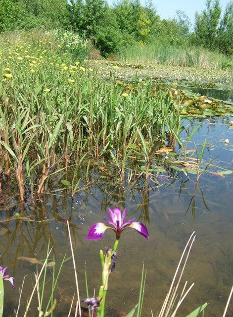 Eversholt Millennium Pond