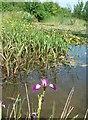 SP9832 : Eversholt Millennium Pond by Rob Farrow