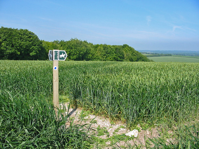 Bridleway junction in wheatfield Pentridge Dorset