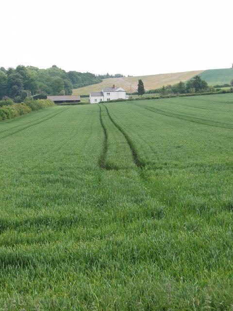 Wheat field in village of Wheatfield