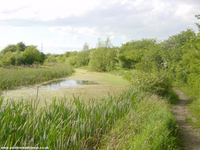 The disused Barnsley Canal near Wilthorpe