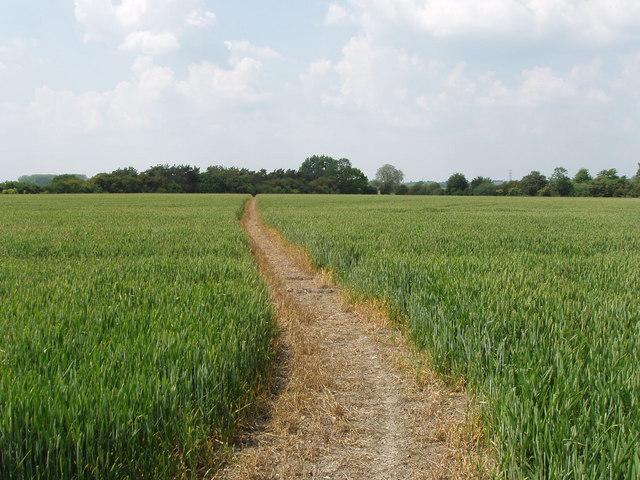 Wheatfield with footpath, near Stoke Talmage