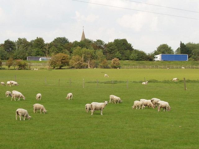 Sheep, M40 motorway, and Tetsworth Church