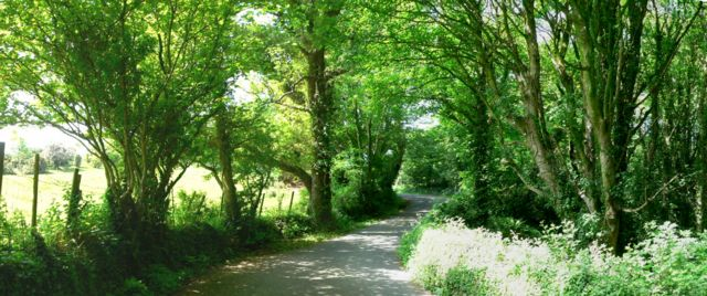 The Road Through Coed Cadw, Llanfaes, Anglesey.
