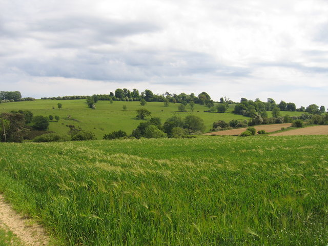View towards Hidcote Coppice