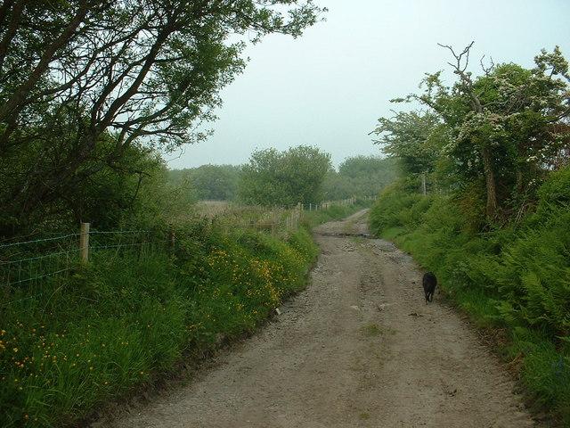 Lane near Cefn-cae'r-ferch