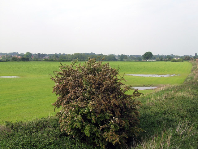 Field beside the railway line