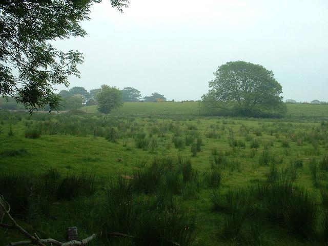 Farmland near Caer Ferch Uchaf
