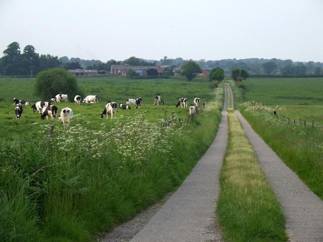 The long driveway to Marbury Heyes