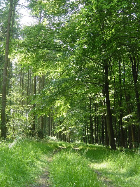 Great Wood, near Froyle