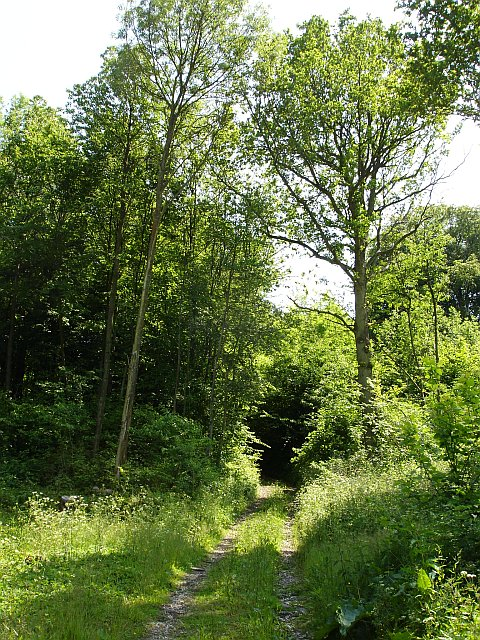 Woodland near Wichling pumping station