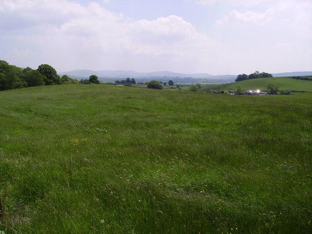 Meadow, Selside