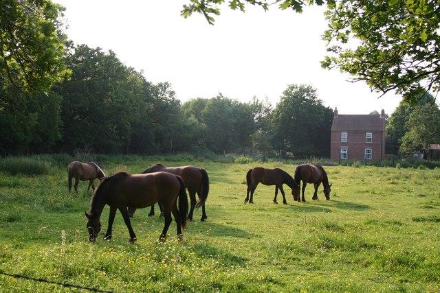 Ponies & Aspen House