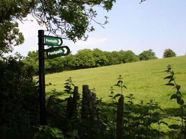 Meadow near Filmer Wood