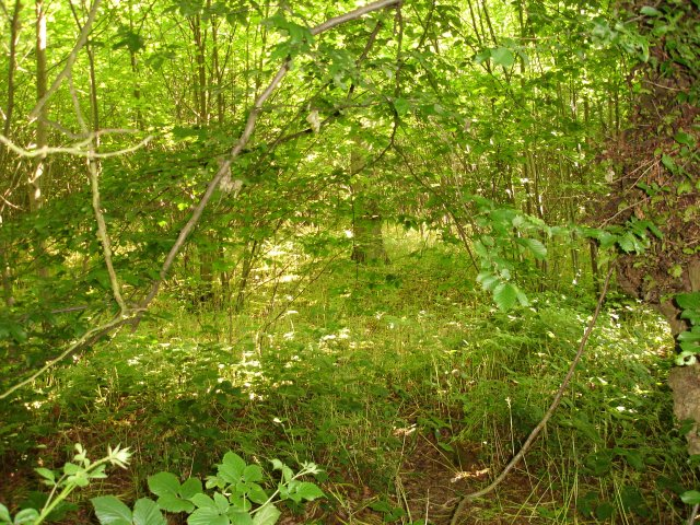 Dappled shade in Filmer Wood