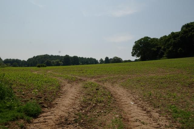 Field at Dalditch