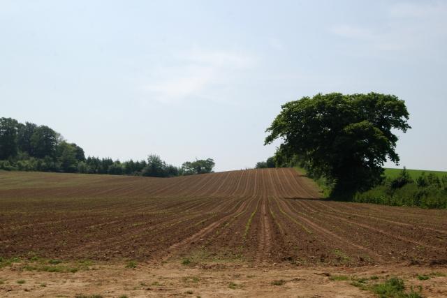 New crops, Blackberry Farm, Colaton Raleigh