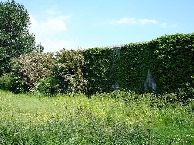 Ivy clad barn at Green Farm