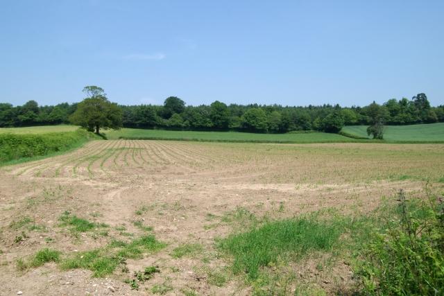 Field and woodland, Blackberry Farm, Colaton Raleigh