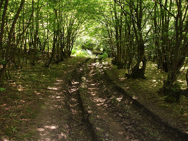 Bridleway through King's Acre