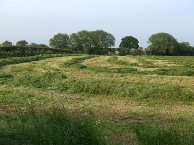 Field after crop cutting