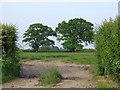 SJ6243 : Trees in a field by Nigel Williams