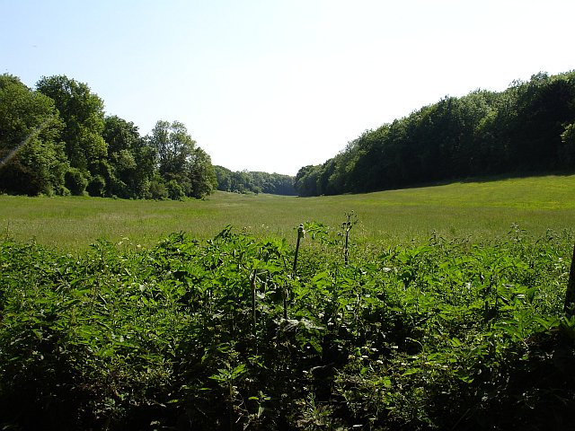 Meadow east of Shulland Wood
