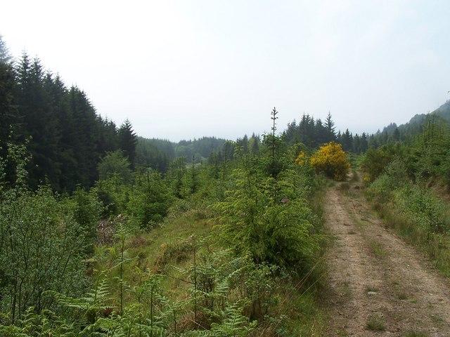 Dunoon, Bullwood - Bishop's Glen Track