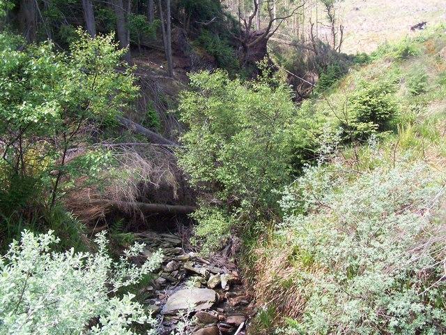Dunoon, Bullwood - Bishop's Glen Track, Berry Burn