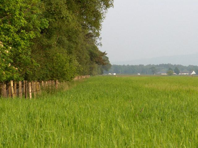 Ochtertyre Moss Wood