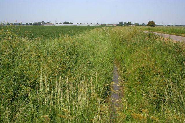 Fenland countryside