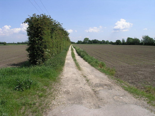 Tall Hedge and Track