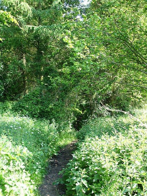 Path into Park Wood