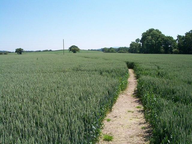 Well Defined Footpath, Hanley Swan