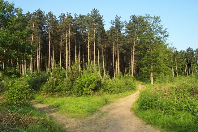 Cannock Chase near Castle Ring