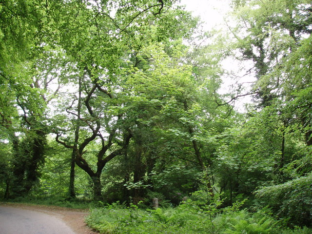 Woodland near Godolphin House
