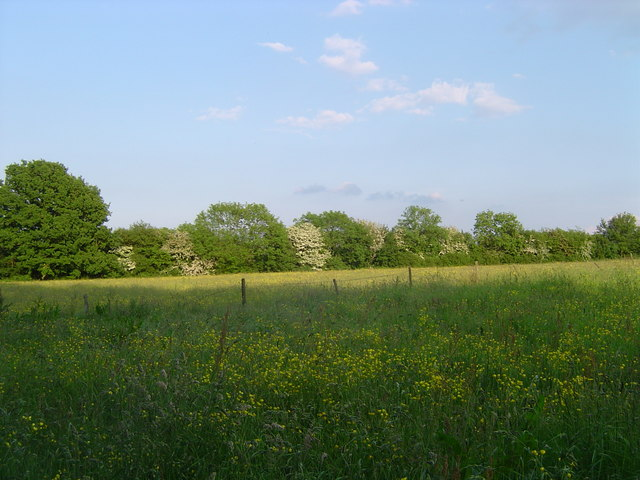 Meadow near Wigginton