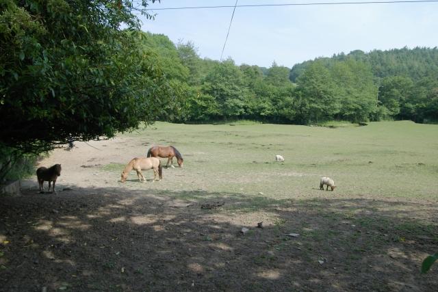 Field near Hay Lake Mill