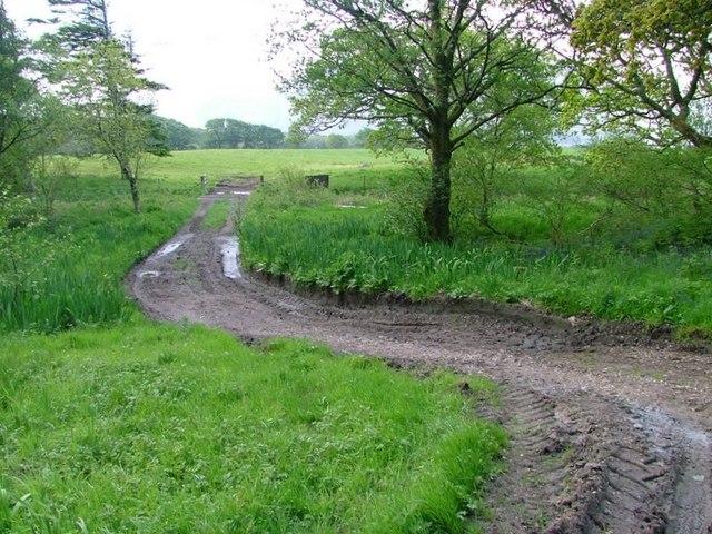 Farm Track to Fields, Killiechronan