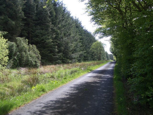 Road through Burnhead Wood