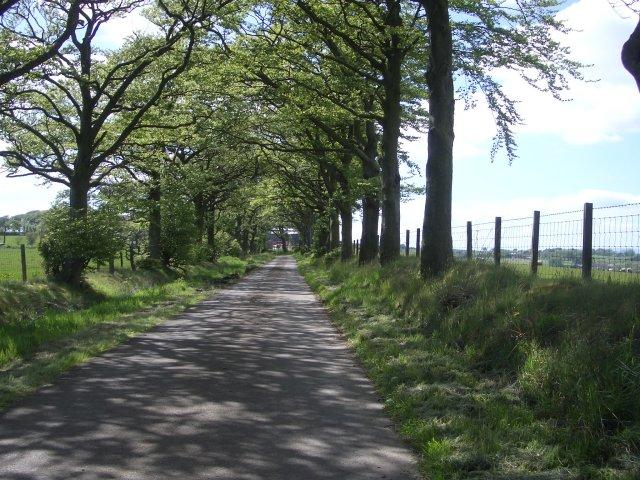 Beech-lined lane