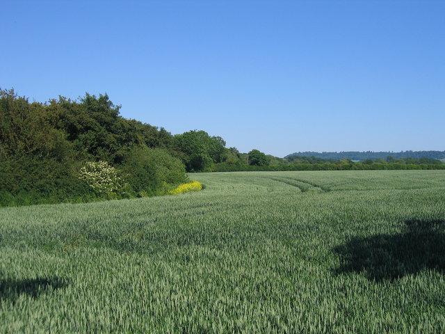 Farmland by the Tysoe Road