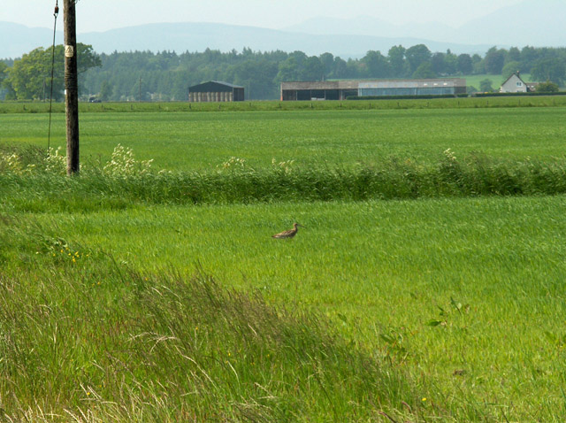 South Woodlane and a curlew