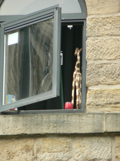 Giraffe at the window