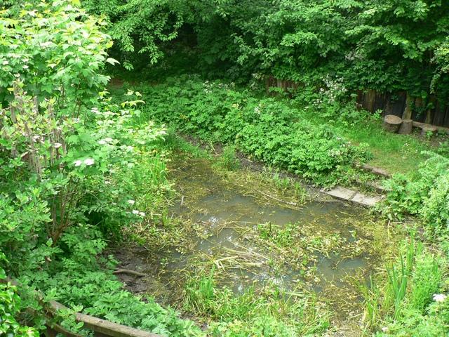Pond, Hollybush Conservation Centre, Leeds
