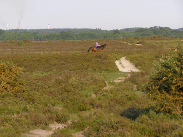 Horse and rider on Yew Tree Heath, New Forest