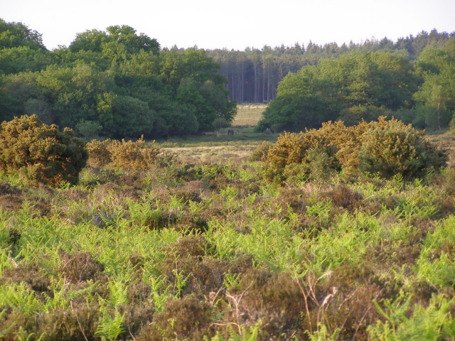 Pottern Ford from Yew Tree Heath, New Forest